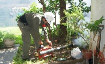 Preocupa la circulación del mosquito vector del dengue en Santo Tomé