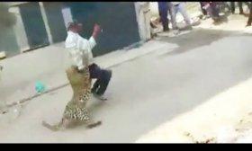 Leopardo suelto en ciudad sembr� el p�nico y atac� a todos