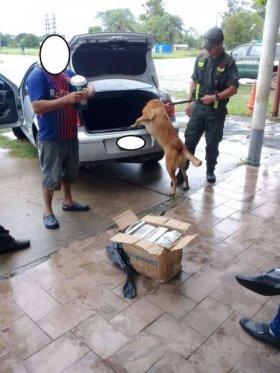 """Formosa: el can """"Dana"""" detectó droga que estaba oculta en un automóvil"""