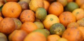 Por ley, la cadena citrícola es declarada en emergencia económica, productiva, financiera y social