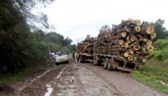 La Justicia ordenó suspender los desmontes en zonas amarillas