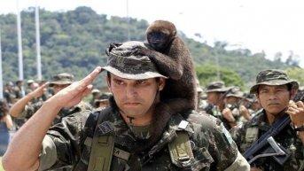 El Ejército brasileño tomará el control del combate contra el fuego en el Amazonas