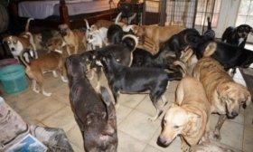 Una mujer hospeda en su casa a 97 perros callejeros para salvarlos del hurac�n Dorian
