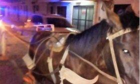 Secuestraron un carro con caballos conducido por un menor de 12 a�os