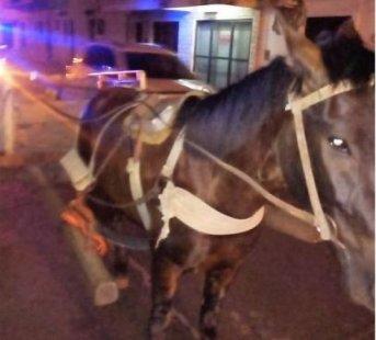 Secuestraron un carro con caballos conducido por un menor de 12 años