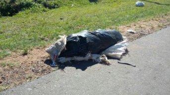 Ruta 94: Chocaron un bulto, y era el cuerpo de un hombre que falleció al instante