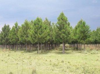 Corrientes cerró 2019 con $ 224 millones en aportes no reintegrables para forestación