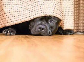 Aseguran que las mascotas incrementan su ansiedad al modificarse sus rutinas por el aislamiento