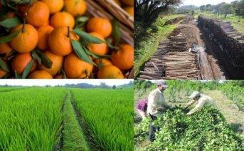 Sectores productivos empiezan a retomar actividades en la región