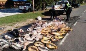 Decenas de surub�s y dorados incautados a depredadores del r�o Paran�
