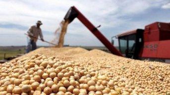 Las exportaciones de soja sin procesar crecieron 50%, mientras que los envíos de harina bajaron 10%