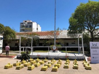 Corrientes: cinco detenidos y casi una tonelada de marihuana