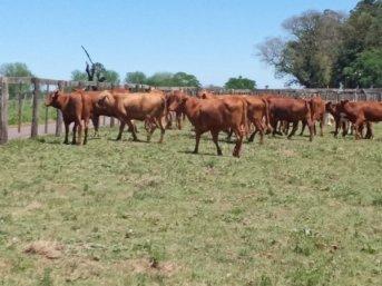 En Bella Vista se concretó la primera subasta para contrarrestar los efectos de la sequía