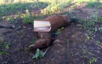 Hallaron caballos mutilados en Corrientes y en Mercedes