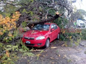 El temporal de anoche provocó caída de árboles