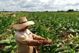 El Gobierno Nacional envió más de $10 millones al sector tabacalero