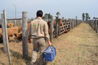 Corrientes: con prórroga, la Fucosa vacunó a casi 3 millones de cabezas