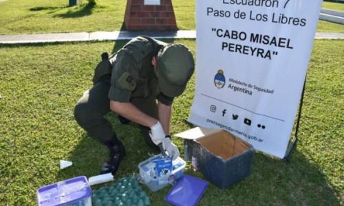 Corrientes: Descubren 2 kilos de marihuana dentro cinco cartones de leche