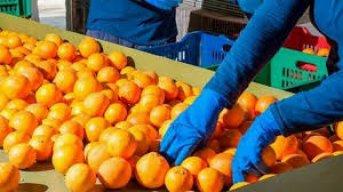 Monte Caseros: Suspendieron la actividad forestal y citrícola